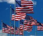 Flaga Stanów Zjednoczonych lub USA