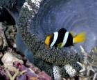 Ryby na dnie morza