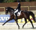 Konia i jeźdźca wykonywania ćwiczenia ujeżdżeniowe