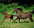 Koń i źrebię troting by step