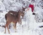 Dwa jelenie obok bałwana