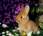 Królik wśród kwiatów