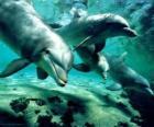Grupy delfinów, kąpiel w morzu