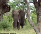 Słoń jedzenia trawy