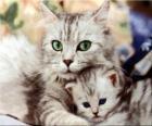 Kotów