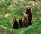 Niedźwiedź Family