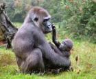 Rodzina goryli