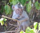 Mała małpa