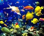 Ryby różnych gatunków i rozmiarów