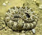 Wąż spiralny
