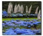 Hortensji i egzotyczne kwiaty
