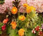 Mieszanych kwiatów