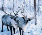 Renifery świąteczne w lesie