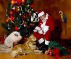 Santa karmienia niektórych zwierząt
