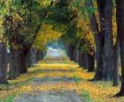 Ścieżki między drzewami