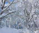 Po śniegu