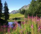Jezioro w kwiatach nowej wiedzy i wysokich stanowisk Góra
