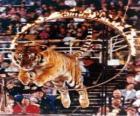 Tygrys skacząc wewnątrz kręgu ognia