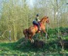 Kurs techniczny konne współzawodnictwo, testy zrozumienia między konia i jeźdźca za pomocą różnych testów.