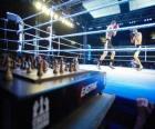 Szachowy boks jest sportem, który łączy w hybrydy boksu w szachy na przemian rund.