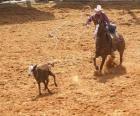 Kowboj jazdy konnej i połowu sztuk bydła z lasso