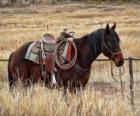 Jazda z kowbojem