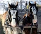 Dwa konie ciągnące wóz