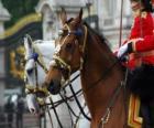 Konie z ozdobami