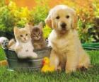 Psiak w dwa kocięta