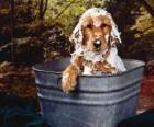 Szczeniaka lub małego psa przy kąpieli