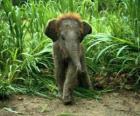 słoniątka
