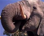 Elephant jedzenie