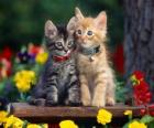 dwa koty z naszyjnik