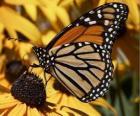 motyl na żółty kwiat