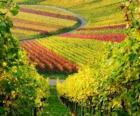 jesiennego krajobrazu w winnicy
