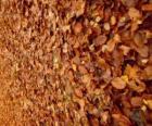 Opadłych liści na ziemi, typowy obraz jesieni