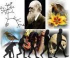Dzień Darwina, Charles Darwin urodził się 12 lutego 1809 roku. drzewo Darwina, pierwszy plan jego teorii ewolucji