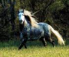 śliczny konia z długą grzywą i długim ogonem