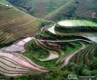 Krajobraz wsi Chiny z polami ryżu