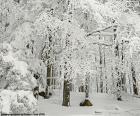 Las całkowicie śnieg
