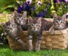 Cztery kocięta w koszyku