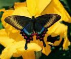 Piękny motyl na żółty kwiat