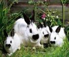 Rodzina królików