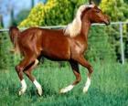 Elegancki młody koń