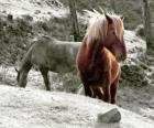 Wypas Konie w dziedzinie