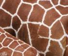 Skóry żyrafy, każdy ma swój wzór miejsca różnią się w rozmiar, kształt i kolor