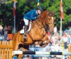 Skoki przez przeszkody. Jeździec i Koń w skoku
