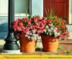 Kwiaty w doniczce lub doniczka