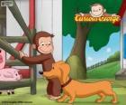 Małpa George i Hundley psa kiełbasa