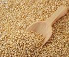 Nasion Komosa ryżowa